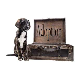 Dog Adoption Requirements- Is A Dog Right For You?