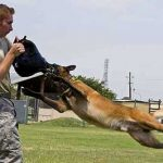 Learn Some Really Cool Tricks To Teach Your Dog! Step by Step Guideline
