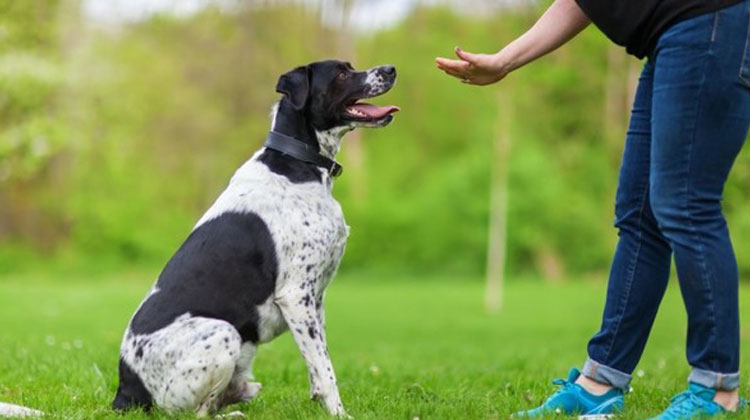 Cool Tricks To Teach Your Dog