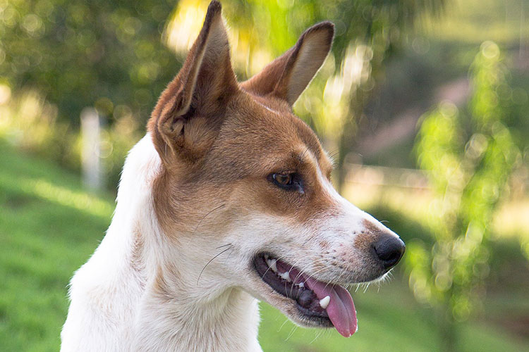What Kind of Dog Should I Get – Guide to Have an Ultimate Best Friend