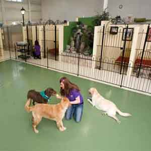 Dog Boarding Portland Or - Top Ten Best Dog Boarding In Portland OR