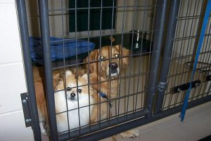 Top Ten Dog Boarding Facilities in the Portland Or Area