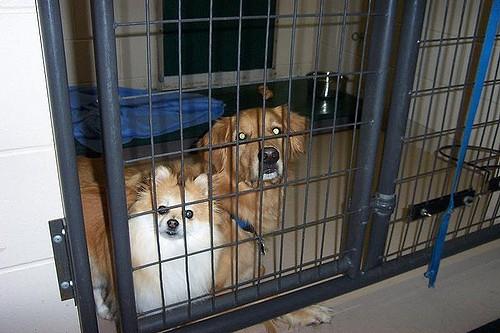Top Ten Dog Boarding Facilities in the Portland Or Area