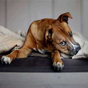 Does Your Dog Not Eating? Possible Causes and Appetite Solutions.