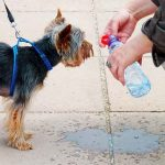 Top ten most popular dog water bottles