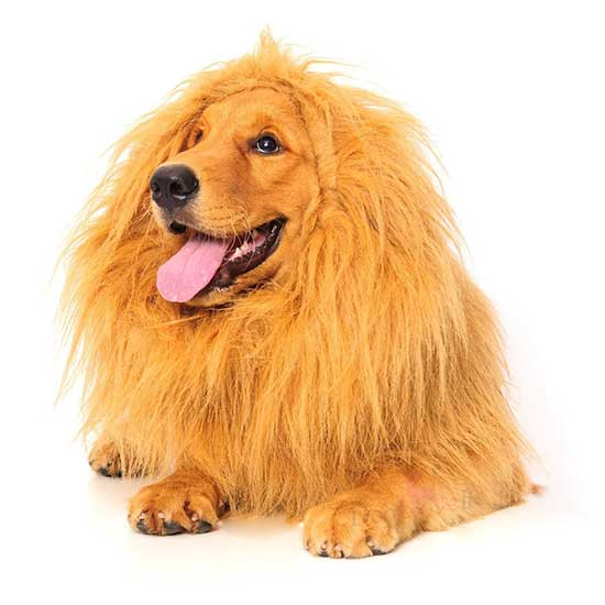 Lion Mane Dog Costume