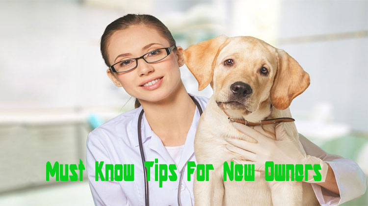 13 Must – Know Tips for New Dog Owners