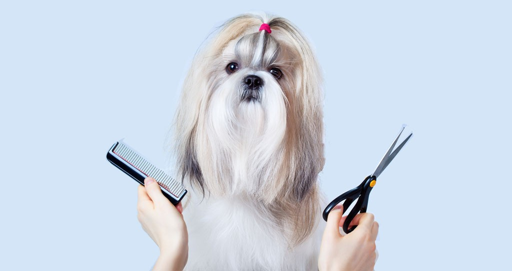 How to Groom a Dog at Home – DIY Dog Grooming Guide