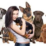 The Comprehensive Overview on Different Dog Breeds