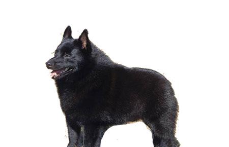sensitive dog breeds