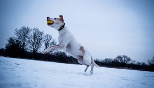 Teach a Dog to Fetch | The Comprehensive Guideline to Teach a Dog to Fetch a Frisbee.