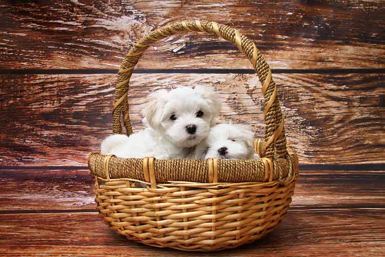 World's smallest dogs who are sensitive