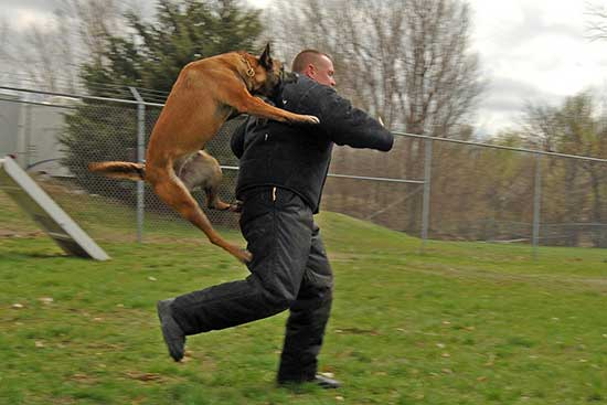 What to Do If a Dog Attacks You – Pet Dog Planet