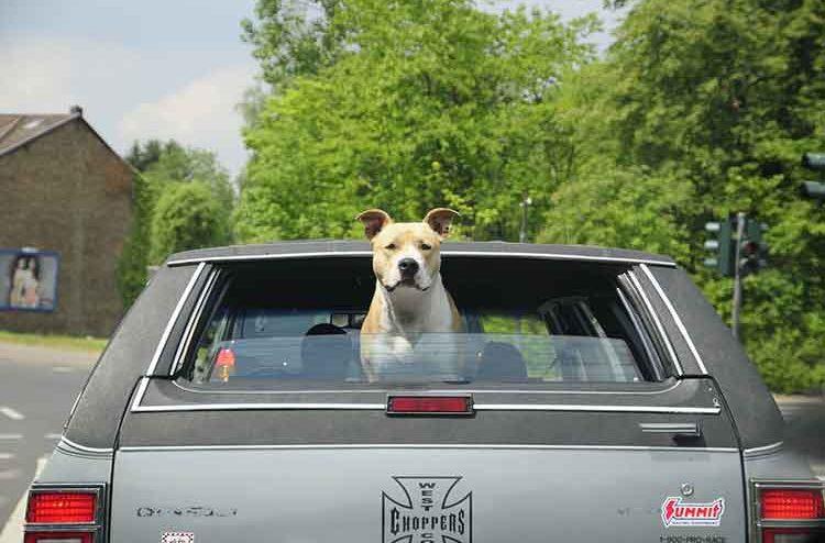 safest way to transport dog in car