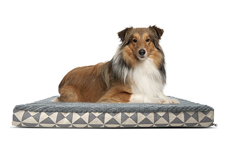 dog beds review