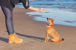 Cesar Millan's Personal Instruction