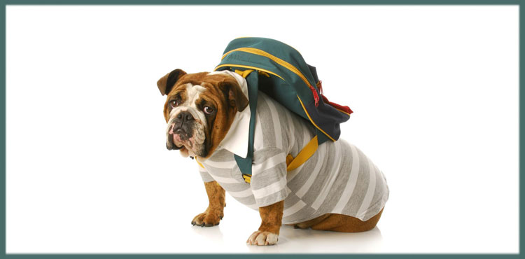 The advantages of a dog backpack – Petdogplanet
