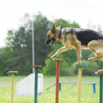 Finding a Good Dog Trainer