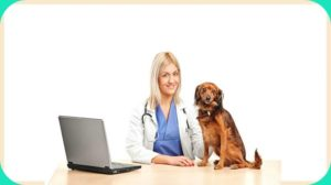 Health Care Tips for Small Breed Dogs