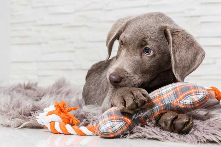 """Resource Guarding – Your Dog is Saying """"This is Mine!"""