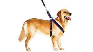 Why You Should Choose a Dog Harness Over a Collar | Harness vs Collar