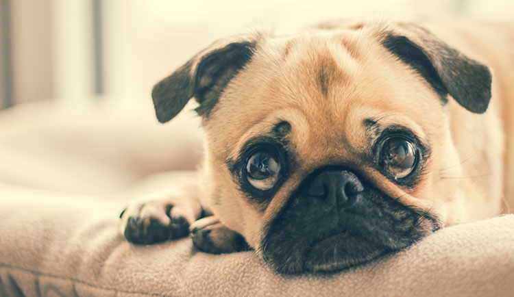 Top 10 Reasons Why Your Dog Is Stressed