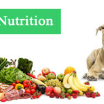 5 Common Dog Nutrition Mistakes to Avoid