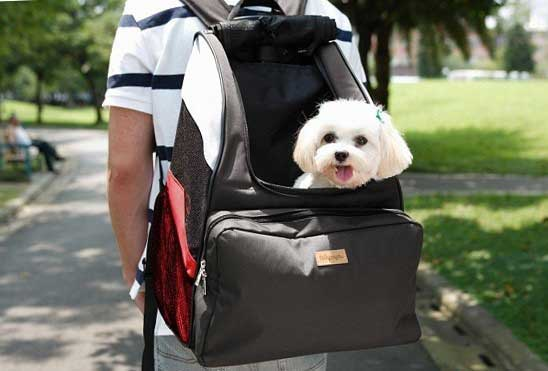 Best Dog Backpack Carrier Reviews