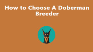 How to Choose A Doberman Breeder