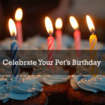 Interesting Ways To Celebrate Your Pet's Birthday