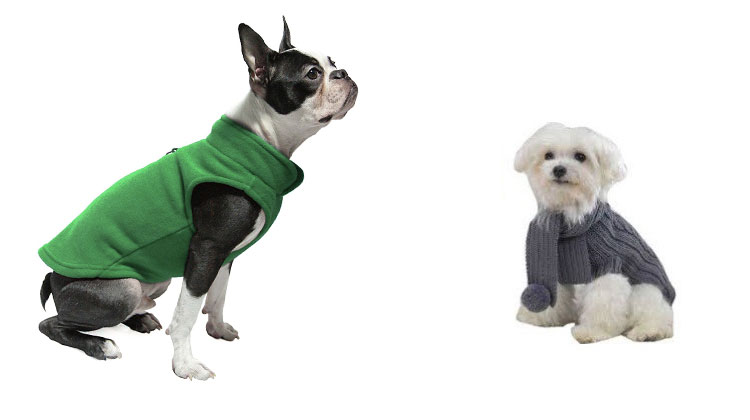 do dogs need sweaters