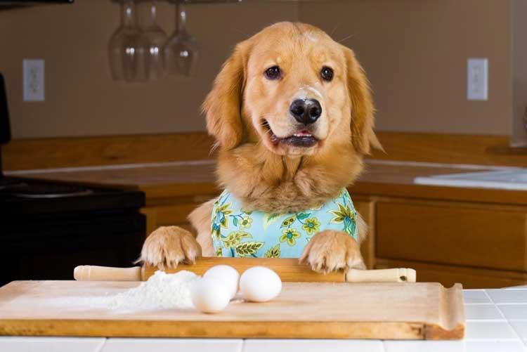 A Classic Dog Recipe