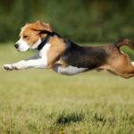 Dog Food and Nutrition Tips: Keeping your dog's coat shiny and happy