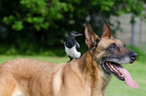 Guide to Train Your Dog to Get Along with Your Bird