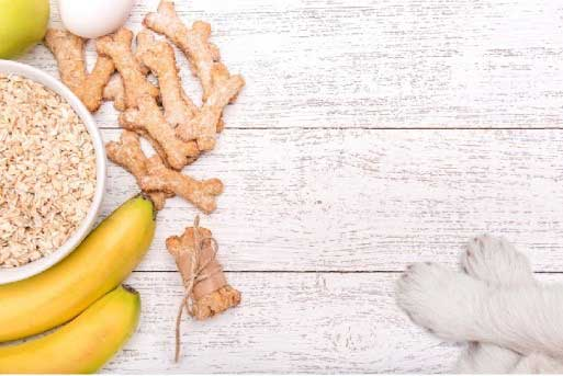 Raw Foods for Dogs