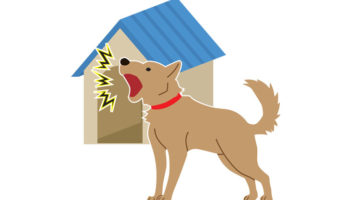 Is Your Dog's Barking Behavior Driving You Barking Mad?