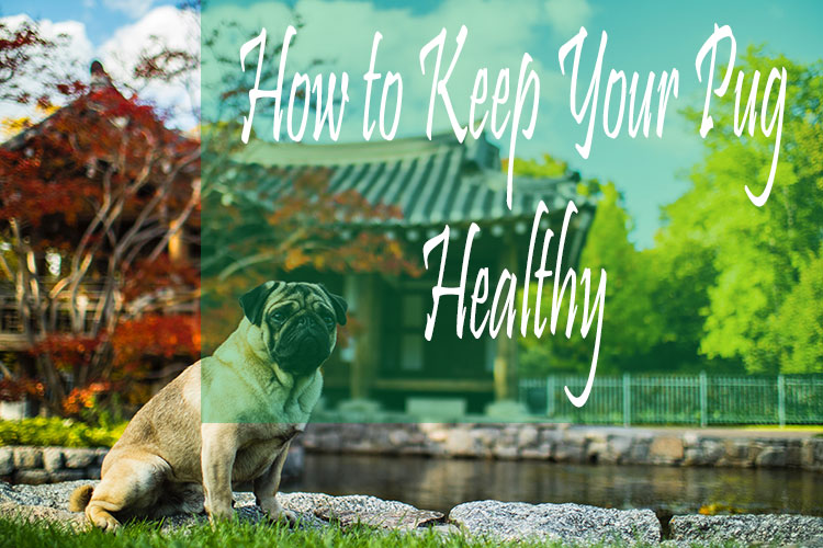 how to keep your dog healthy
