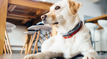 Indoor Activities Your Dog Will Love