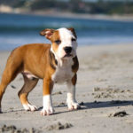 The Origin of All Dogs: Know How Your Dogs Came To Be