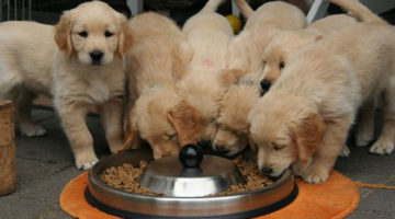 Dog Nutrition | Nutrition Tips for Raising Dogs