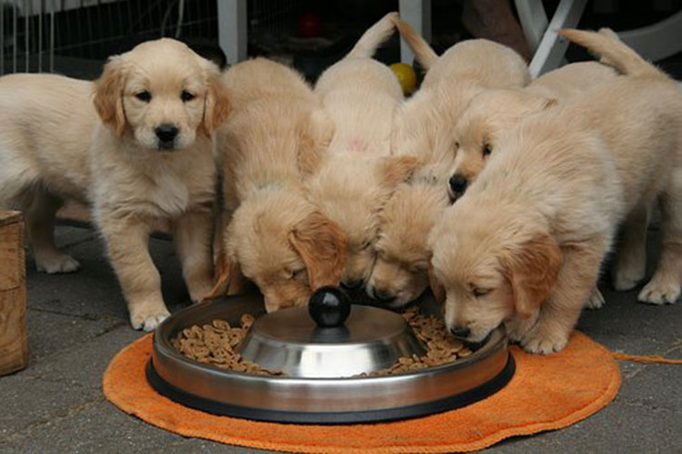 Dog Nutrition   Nutrition Tips for Raising Dogs