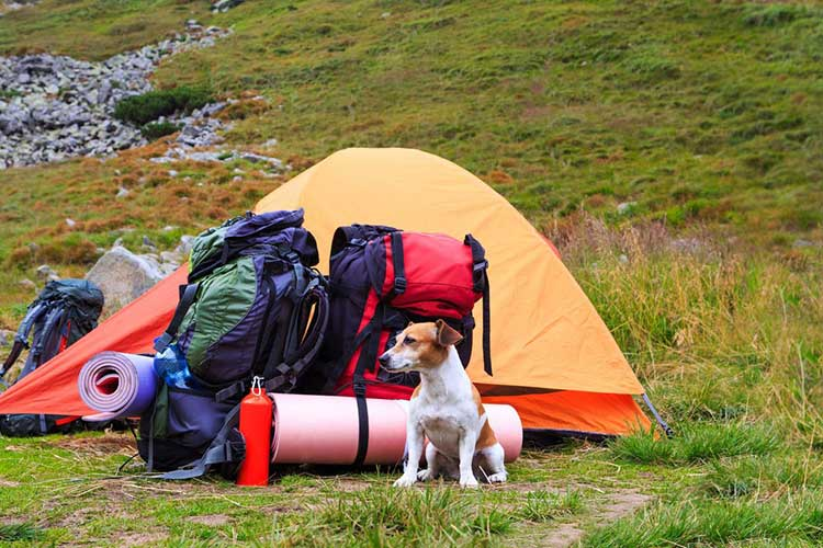 Dog Hiking Gear: 5 Essentials For Every Type