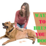 Everything You Need to Know About Brushing Your Dog