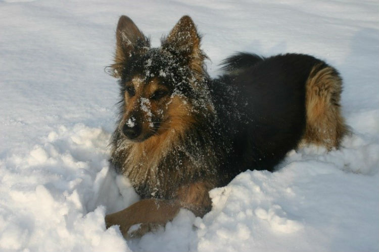 Ways to Keep Your Dog Active Enough in the Winter