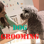 How to Groom a Dog: Easy Guide for the Beginners