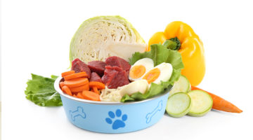 Dog Nutritional Requirements:Guide to Understand Your Dog's Diet Needs