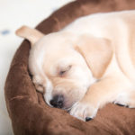 5 Effective Tips on How to Get Your Dog to Sleep in His Own Bed