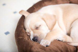 train dog to sleep in dog bed