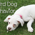 7 Weird Dog Behaviors and Their Meanings