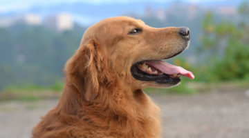 Best Dog Clippers for Thick Coats & Hair